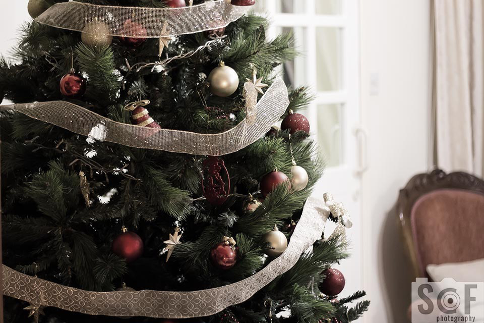 Christmas Tree - Blue Cone Monochromacy