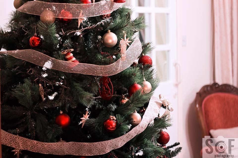 Christmas Tree - Tritanomaly