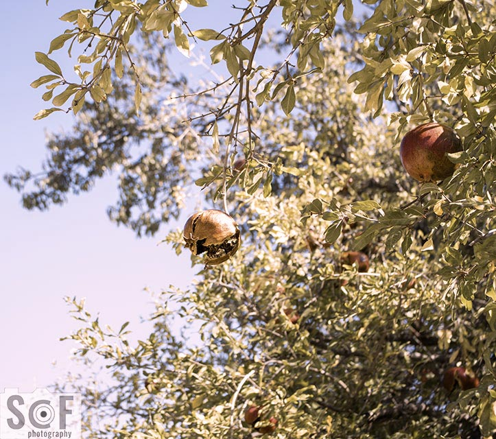 Pomegranate Luck - Deuteranomaly