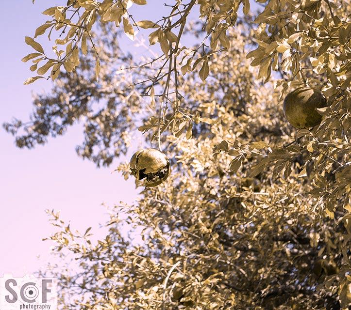Pomegranate Luck - Deuteranopia