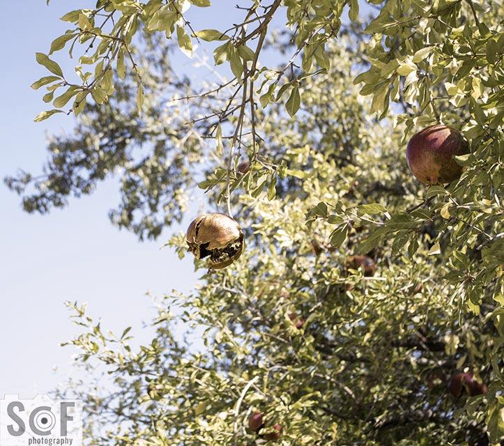 Pomegranate Luck - Protanomaly