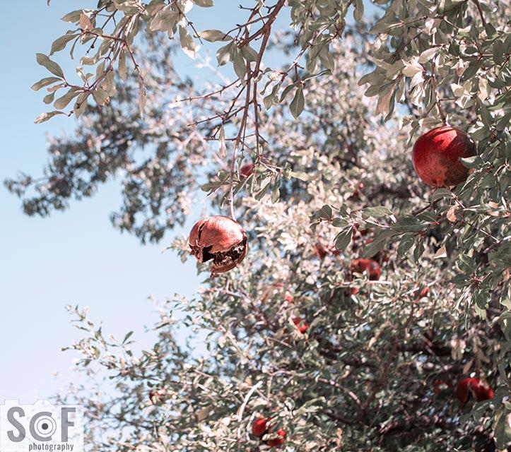 Pomegranate Luck - Tritanomaly