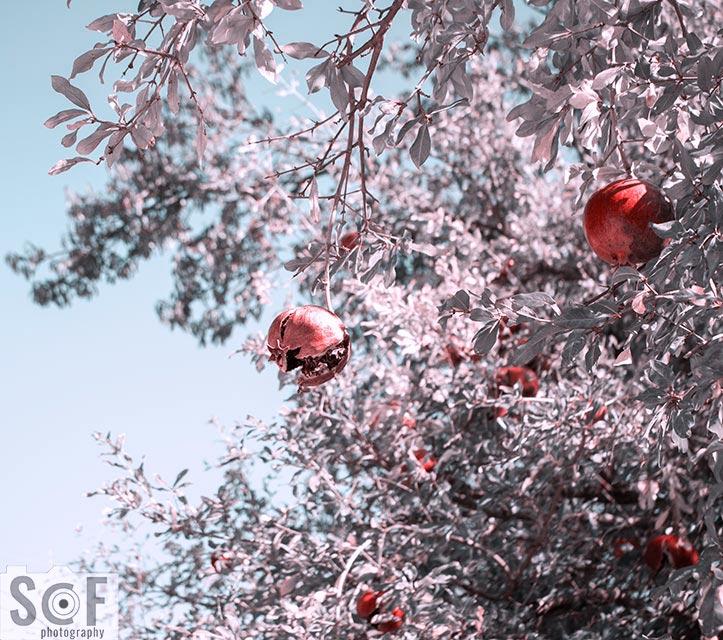 Pomegranate Luck - Tritanopia