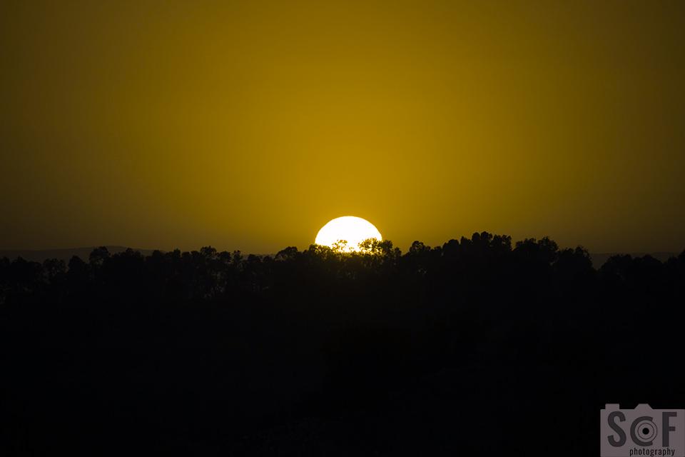 Sunset Above Trees - Deuteranopia