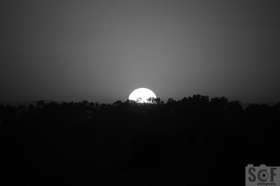 Sunset Above Trees - Monochromacy Achromatopsia