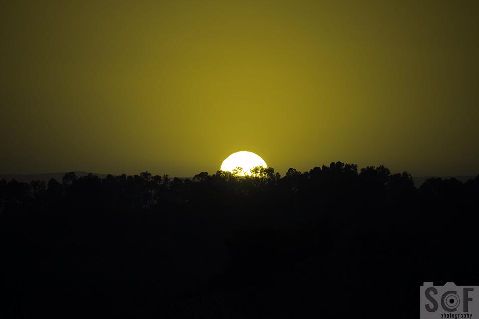 Sunset Above Trees - Protanopia