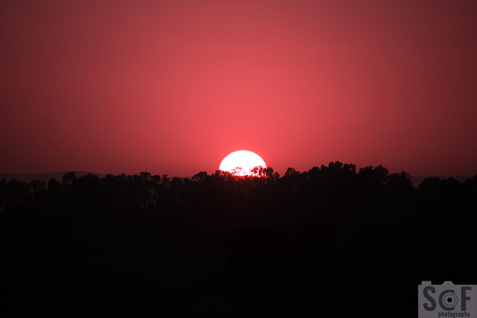 Sunset Above Trees -Tritanopia