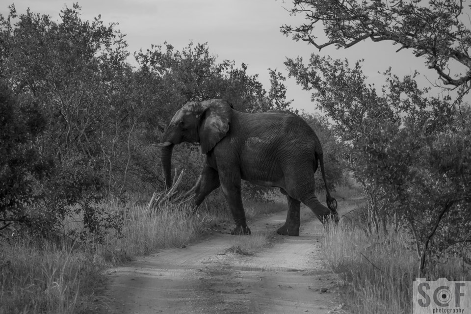 Elephant Crossing 3